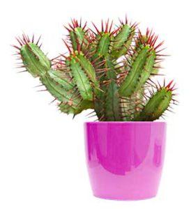 Aménagez votre intérieur avec les plante de la jardinerie animalerie des 2 Vallées à Cernay
