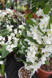 Aménagez votre intérieur avec les plante verte de la jardinerie de la jardinerie animalerie des 2 Vallées à Cernay