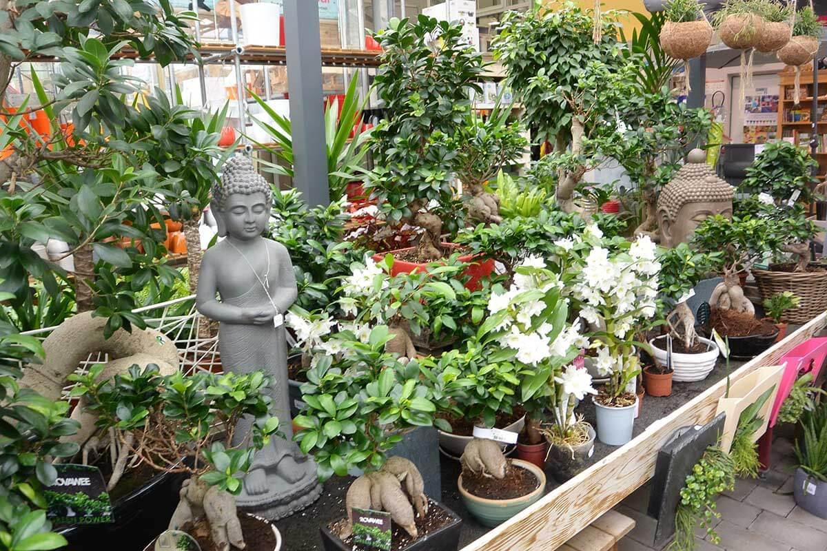 Plantes d 39 int rieur jardinerie animalerie des 2 vall es for Plantes jardinerie