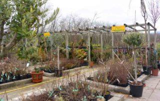 La pepiniere de la jardinerie des 2 vallées