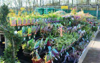 arbres arbustes de la pépinière de la jardinerie de l'Ill